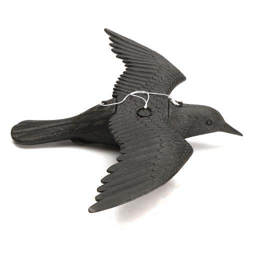 Sgodde – lentävä korppi