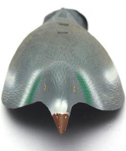 Kyyhky kuorikuva